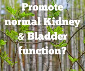 Kidney/Bladder Cleanse