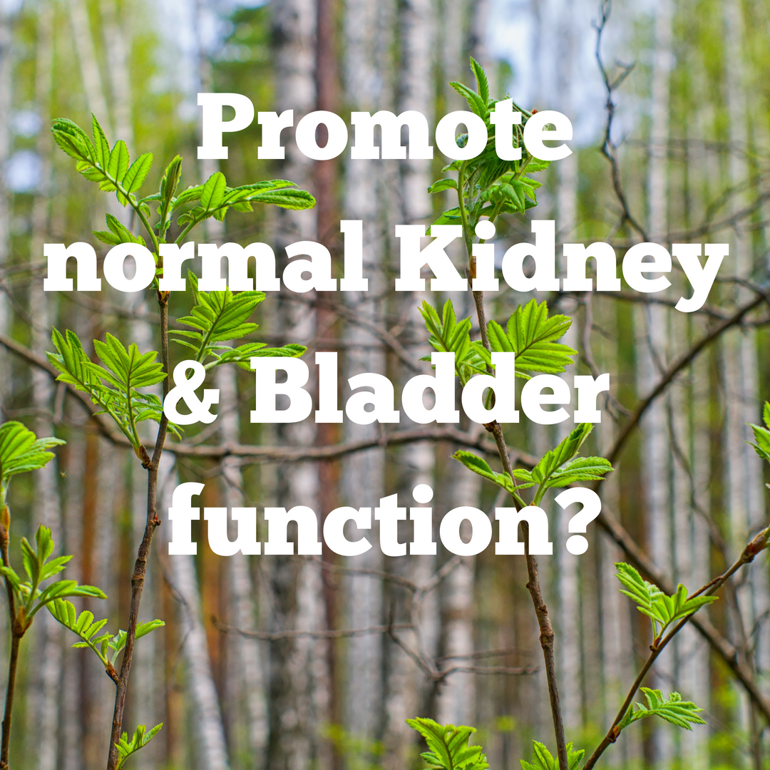Kidney/Bladder Cleanse